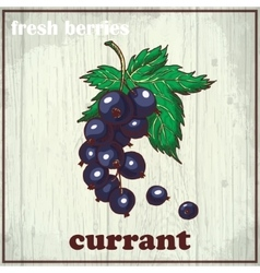 Hand drawing of currant fresh vector