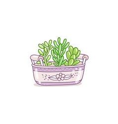 Succulents in a pot vector