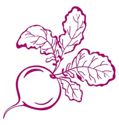 Radish with leaves pictogram vector