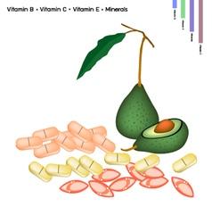 Avocado with vitamin b c and vitamin e vector