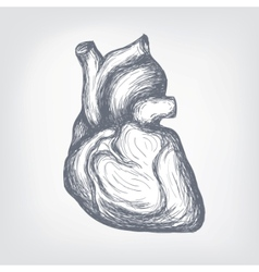 Human heart sketch vector