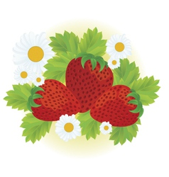 Strawberries and daisy flowers vector