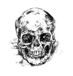Drawing human skull on white vector