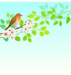 Spring robin vector