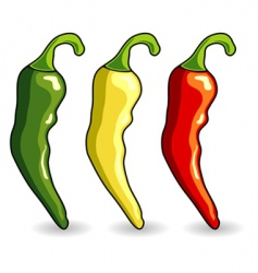Mexican hot chili peppers vector
