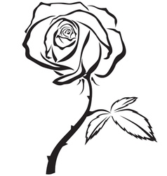 Rose flower vector