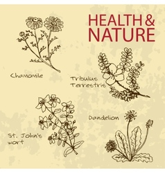 Handdrawn - health and nature set vector