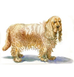Cocker spaniel - an hand painted vector