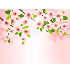 Nature background with blossoming sakura brunch vector