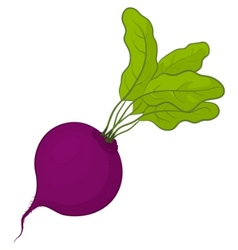 Beet with leaves vector