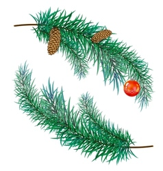 Pine branch with cones and toy vector
