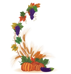 Vine ears and pumpkins vector