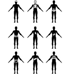 Human organs in body icons vector