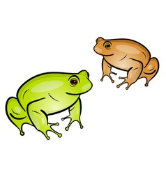 Frog isolated on the white vector