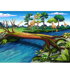 A flowing river at the forest vector