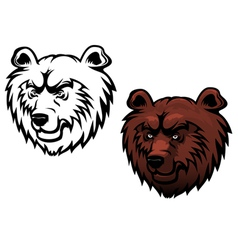 Wild kodiak bear vector
