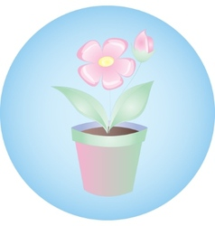 Plant flowers in pot on blue background vector