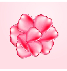 Beautiful red rose petals vector