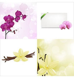 Orchids and vanilla set vector