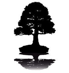 Japanese bonsai tree silhouette on white backgroun vector