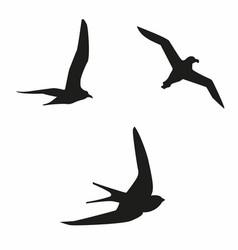 Sea birds vector