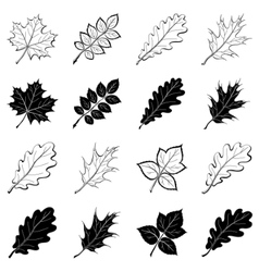 Leaves of plants silhouettes set vector