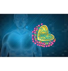 Influenza virus vector