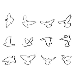 Shape of pigeons and doves vector