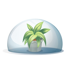 A plant in a pot inside a transparent arc vector