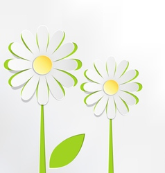 Two cutout chamomiles on grayscale floral spring vector