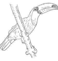 Toucan bird vector