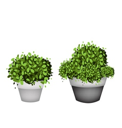 Green trees in terracotta flower pots vector