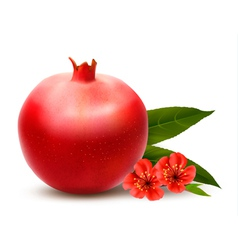 Juicy pomegranate with leaves vector