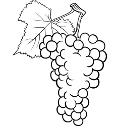 Grapes for coloring book vector
