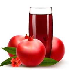 Glass of pomegranate juice with fruit vector