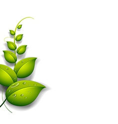 A green plant with water drops vector