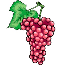 Red grapes fruit cartoon vector