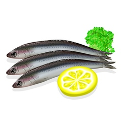 Food anchovy vector