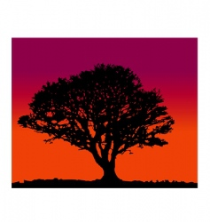 Tree silhoutte sunrise vector