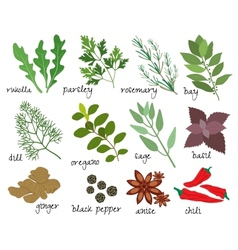 Herbs and spices vector