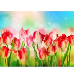 Easter spring background with tulips eps 10 vector