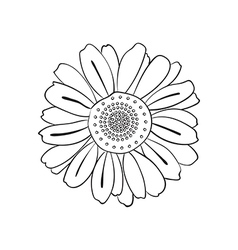 Hand drawn daisy doodle style vector