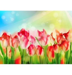 Beautiful red tulips eps 10 vector