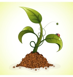 Young green sprout vector