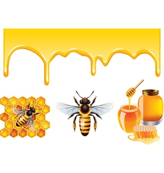 Honey set vector