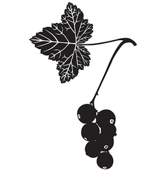 Currant silhouette vector