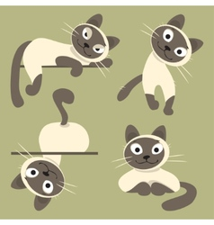 Set of siamese cats vector