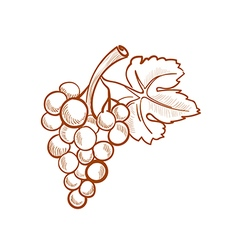 Hand drawn grapes doodle style vector