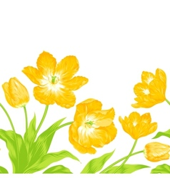 Three yellow spring tulips vector
