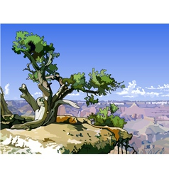 Tree on a rocky ledge above the canyon vector